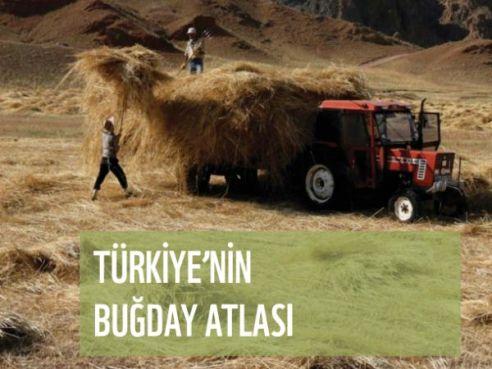 bugdayatlasi_01